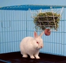 Picnic Area� Rabbit Hay Manager Feeder
