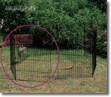 Rabbit Run Around Add a Panel
