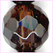Smoky Quartz Factt 6mm Round