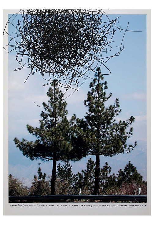 To create these unique drawings, Pickett attaches a pen to the end of a live tree branch and positions a drawing surface (paper, panel or photograph) below. Her implement thus records the branch movements brought on by each gust of wind. A drawing may take anywhere from 15 minutes to 4 hours to complete; each expresses the behavior of a different tree, its species and the particular wind conditions during which it was  made. Reminiscent of Cy Twombly
