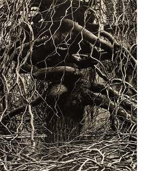 Featured image is reproduced from <I>Paul Strand: The Garden at Orgeval</I>.
