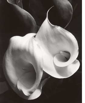 "Featured image, ""Calla Lily"" (1925), is reproduced from Imogen Cunningham, published and distributed by ARTBOOK 