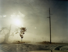 Todd Hido: One Picture Book #60: Crooked Cracked Tree