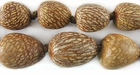 """Betel Nut Palm"" Seeds Beads"