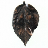 "Choco Brown Electroplated ""Gumamela Leaf""  Pendant"