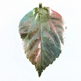 "Multicolored Metallic Electroplated ""Gumamela Leaf"" Pendant"