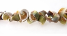 Exotica Rose Shell Beads 10mm