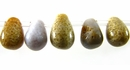 Fossil Coral Briolette Beads