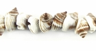Nutmeg Whole Shell Beads 10mm