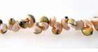 Exotica Rose Shell Beads 4-5mm