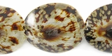 Tiger Limpet Shell Beads 38mm
