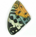 Golden-blue Butterfly Wing  Paper Print Wrapped Wood Pendant