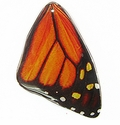 Red Butterfly Wing Paper Print Wrapped Wood Pendant