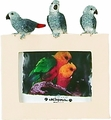"Picture Frame 2.5"" x 3.5"" African Grey"