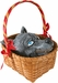 Little Red Riding Hood Basket With Wolf Head