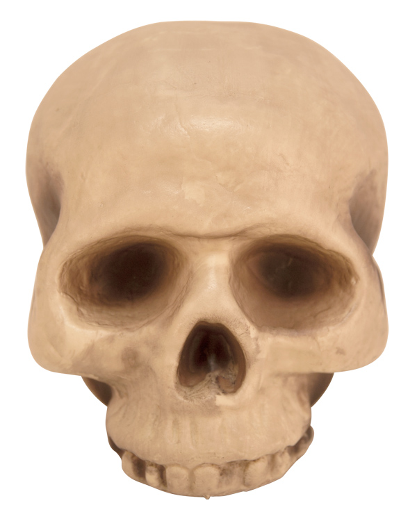 Skull Top Halloween Prop