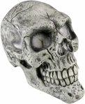 Fake Full Skull Head Prop