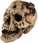 Fake Skull w/ Fangs Prop