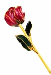 Abracadabra Gold Dipped Rose