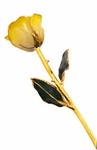 White & Yellow Gold Dipped Rose