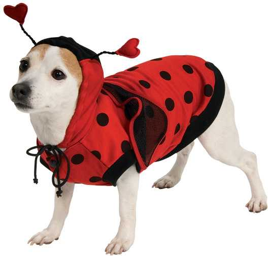 Lady Bug Dog Costume