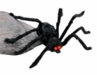 Medium Light Up Black Spider