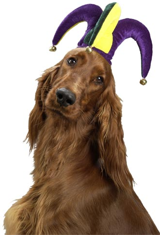 Jester Dog Hat