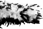 White/Black W/Tinsel Feather Boa