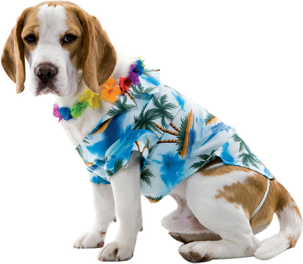 Hawaiian Dog Costume