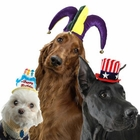 Dog Costume Hats