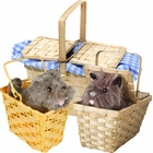 Toto in a Basket Accessories