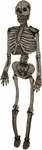 Full Size Poseable Skeleton