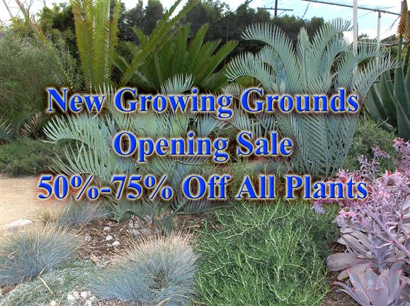 Growing Grounds Opening Sale