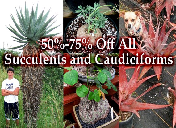 Succulents and Caudiciforms