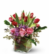 Sweetheart Kiss - Dallas Tulip Flowers Delivery