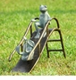 Sliding Frogs Garden Sculpture by SPI Home