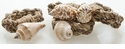 Abigails Napkin Rings Shell (Set of 4)