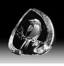 Mats Jonasson Maleras Swedish Crystal Flycatcher