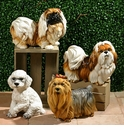 Intrada Italy Brown & White Shih-tzu Dog Statue