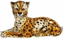 Intrada Italy Cheetah Lying Down Statue