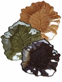 Vietri Elm Leaf Glass