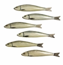 Sardines Handpainted Set of 6