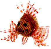Webkinz Plush Lion Fish