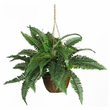 Boston Fern Silk Hanging Basket in Green - Nearly Natural - 6599