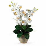 Double Phalaenopsis Silk Orchid Flower Arrangement in Cream - Nearly Natural - 1026-CR