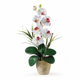Phalaenopsis Silk Orchid Flower Arrangement in White - Nearly Natural - 1016-WH
