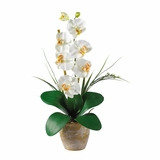 Phalaenopsis Silk Orchid Flower Arrangement in Cream - Nearly Natural - 1016-CR