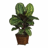 Maranta with Basket Silk Plant in Green - Nearly Natural - 6590-0506