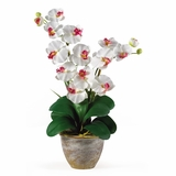 Double Phalaenopsis Silk Orchid Flower Arrangement in White - Nearly Natural - 1026-WH