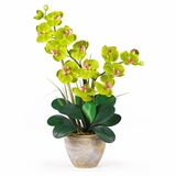 Double Phalaenopsis Silk Orchid Flower Arrangement in Green - Nearly Natural - 1026-GR
